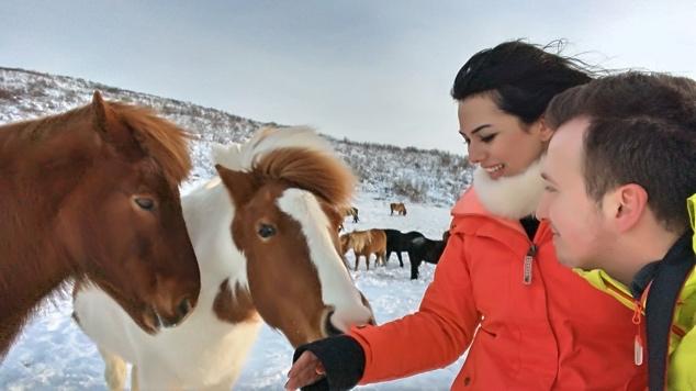 Iceland_Golden_Circle_Horses4